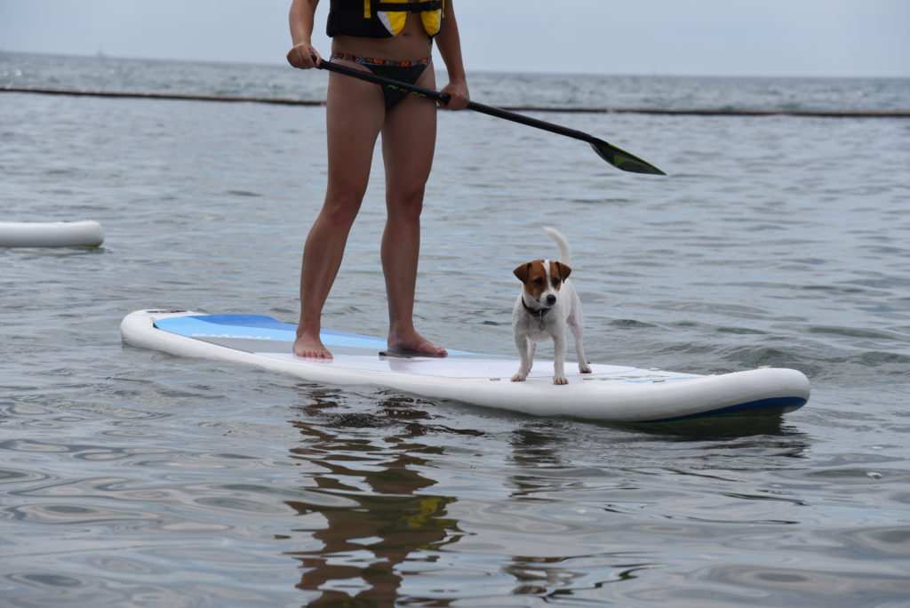 woman and dog on a stand up paddle