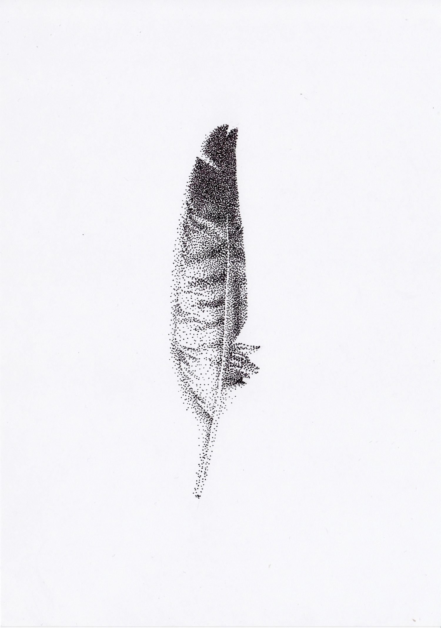 pointillist drawing of feather