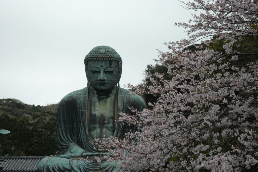 buddha statue and cherry blossoms
