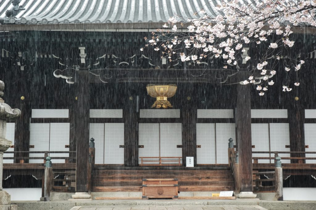 temple in the rain, branch with cherry blossoms